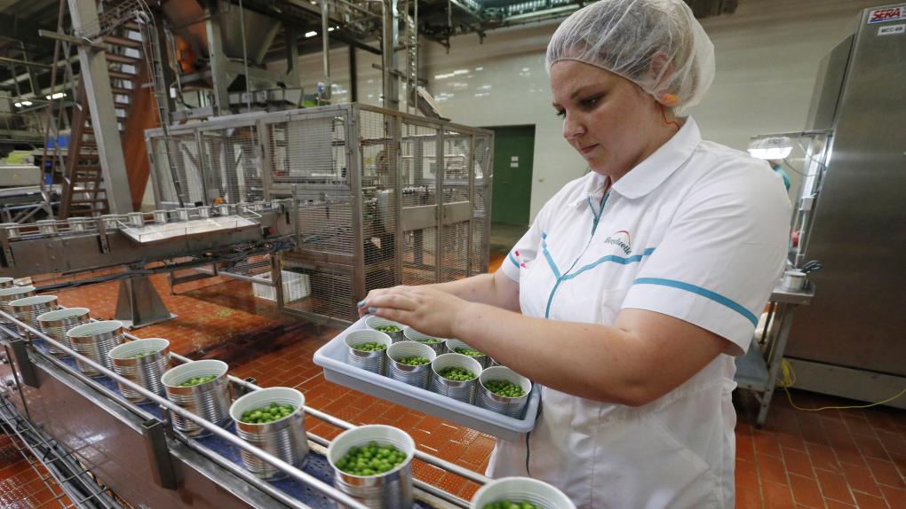 Линия по производству зеленого горошка на заводе в Краснодарском крае