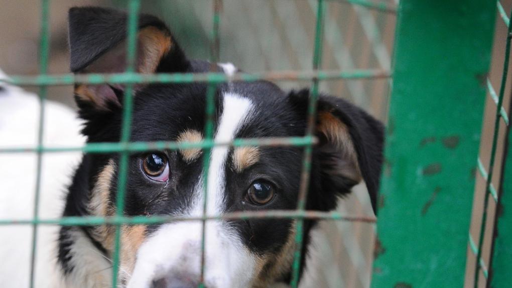 Что делать с бездомными животными?