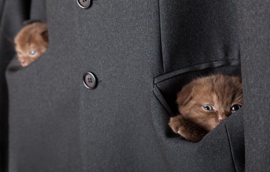 Картинка котенок в кармане