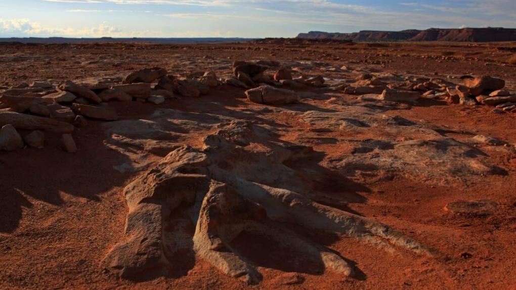 Пустыня в американском штате Аризона