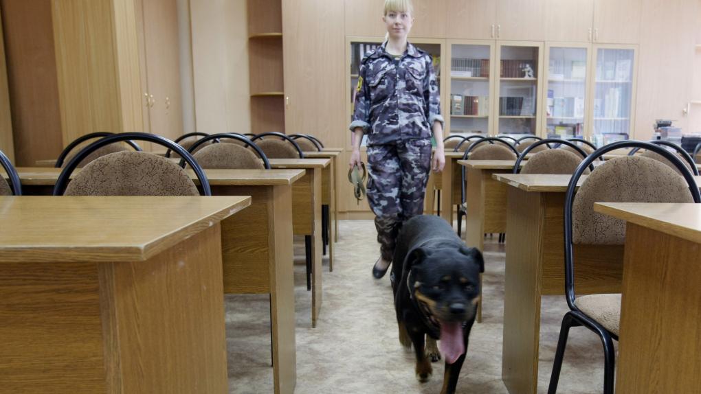 Кинолог с собакой во время проверки безопасности здания школы.