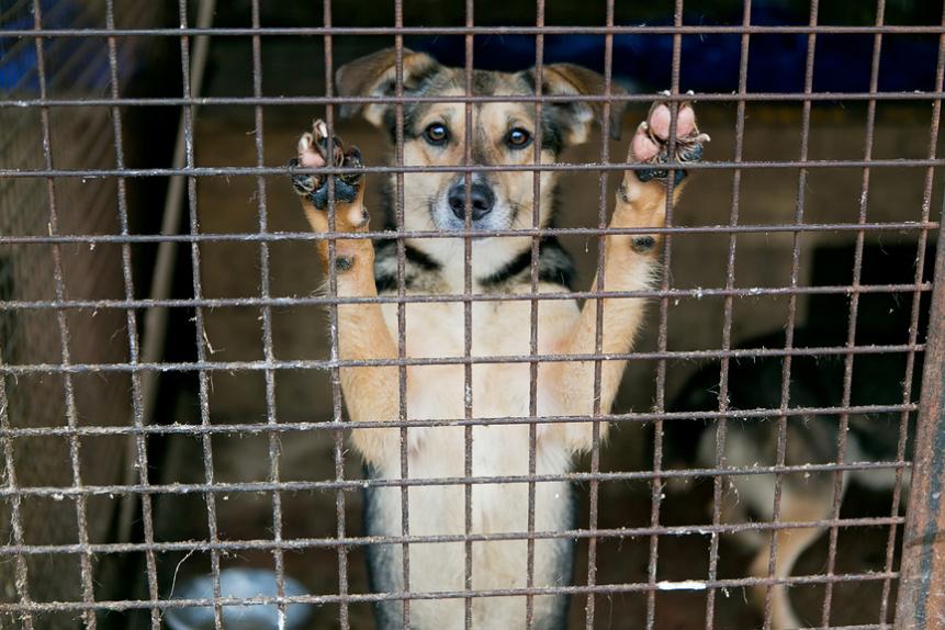общество защиты животных москва горячая линия
